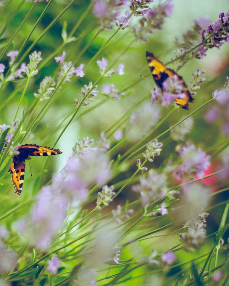 Landscape design: photo of butterflies in meadow